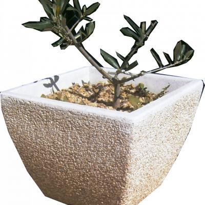 Pot avec olivier
