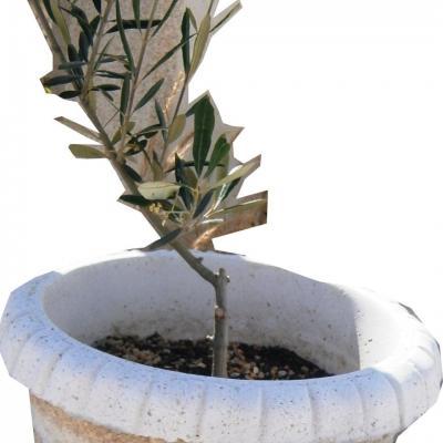 Pot en pierre reconstitué avec un olivier