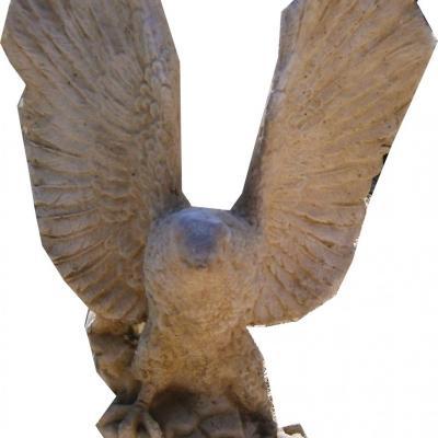 Très jolie aigle avec de longue ailes